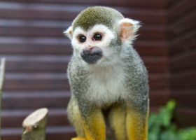Monkey Haven isle of wight attraction for visitors