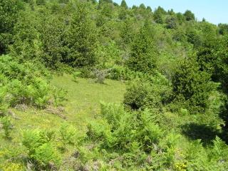 Ολοκλήρωση της Α' φάσης του Εθνικού Παρατηρητηρίου Δασών