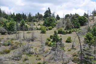 Ολοκλήρωση έρευνας αναγνώρισης αναγκών για τα δάση του Δικτύου Natura 2000