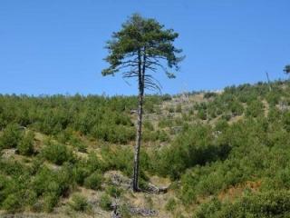 Διεθνής Ημέρα Δασών 2017