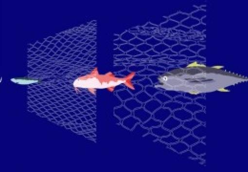 La pêche durable, c'est quoi ?