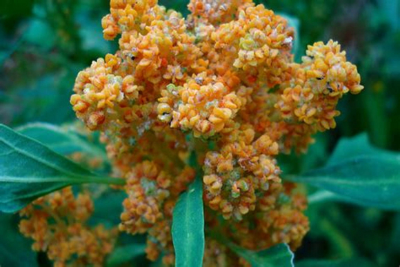 many chia seeds