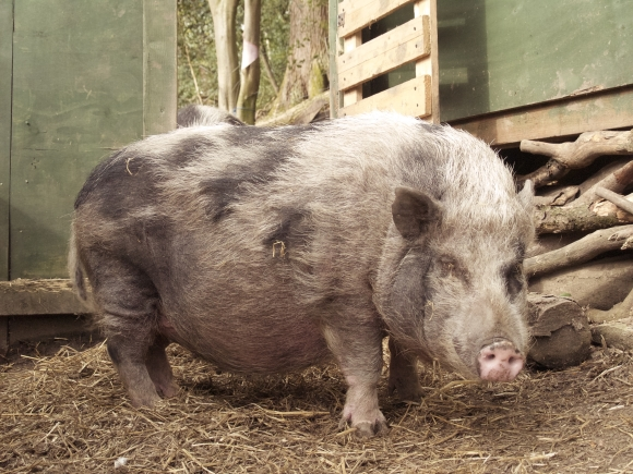 Dottie from our trip to Pigs in the Wood