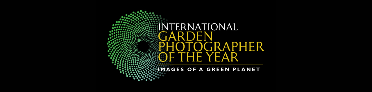 Enter IGPOTY Macro Art competition before the deadline!