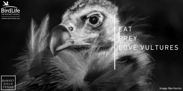 Eat, Prey, Love Vultures