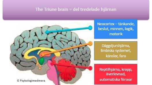 Du använder bara en tredjedel av din neurologi när du fattar beslut