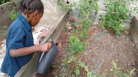 watering plants in our garden