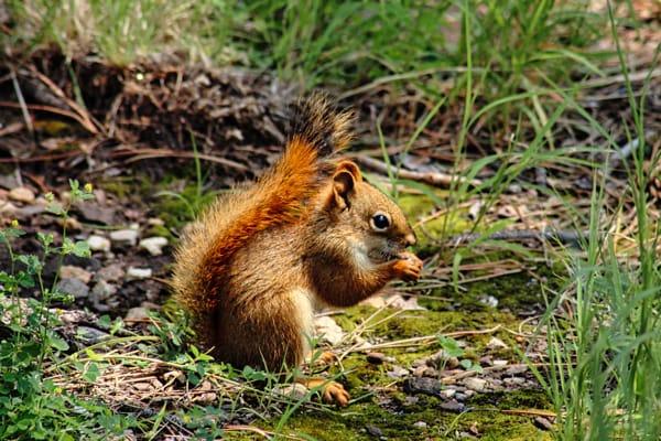 Squirrel at Mt Rushmore