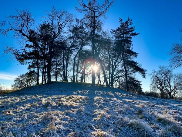 Sunlight Trees Hill