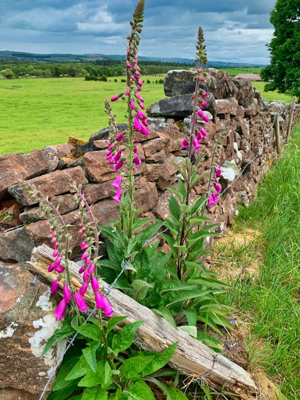 flowers stone wall