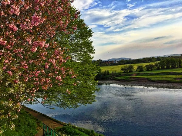 Tree on the River Nith