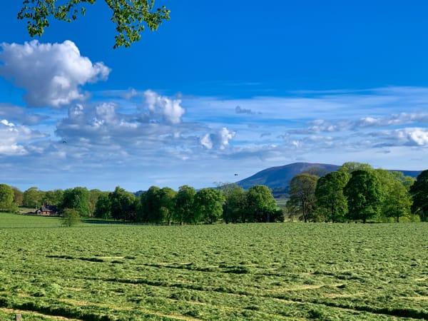 Criffel hayfield
